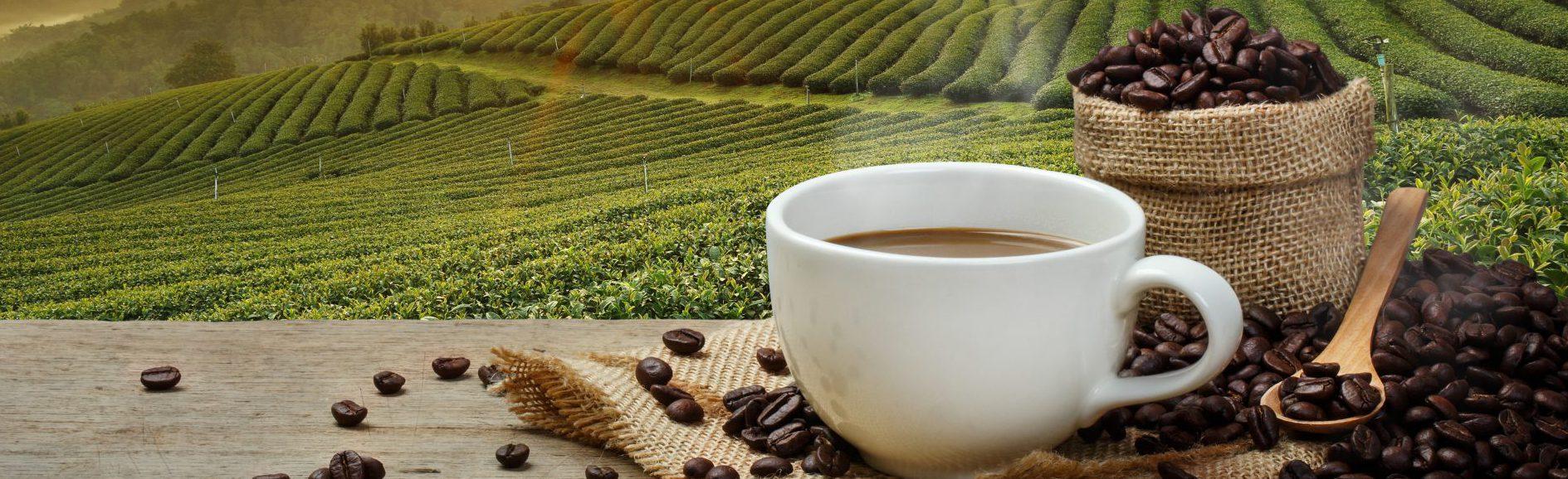 Sector branding geeft een kop koffie en koffiebonen een onderscheidend imago en uitstraling tegen de achtergrond van de plantage